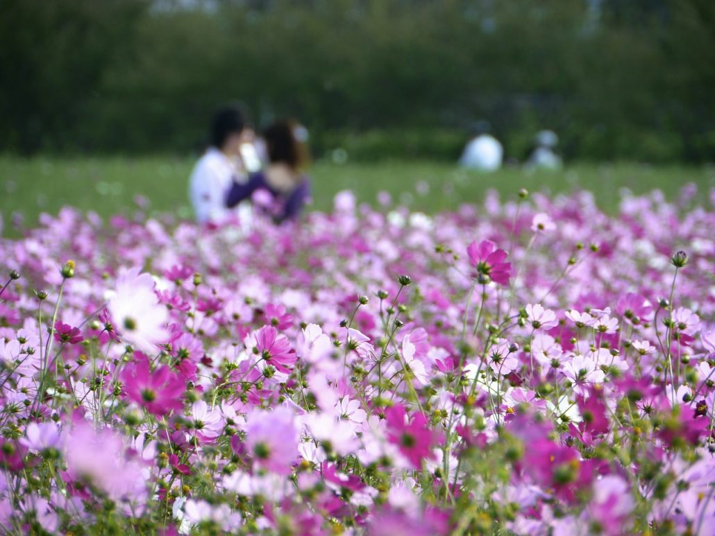 5-leggi-biologiche-fiori-allergie